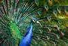 20150524- Bird Magnolia Plantation Swamp-362