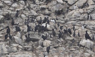 Pelagic Birding Trip 7-13