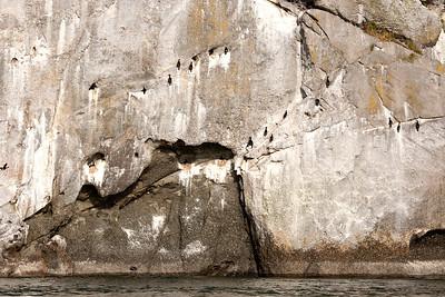 Pelagic cormorants on cliff near Turn Point Lighthouse, Stuart Island