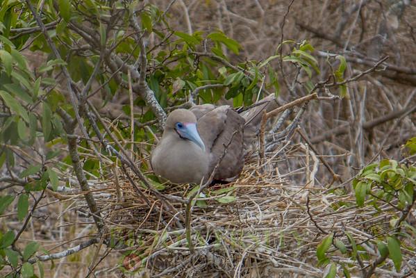 Biodiversity Group, _MG_5023
