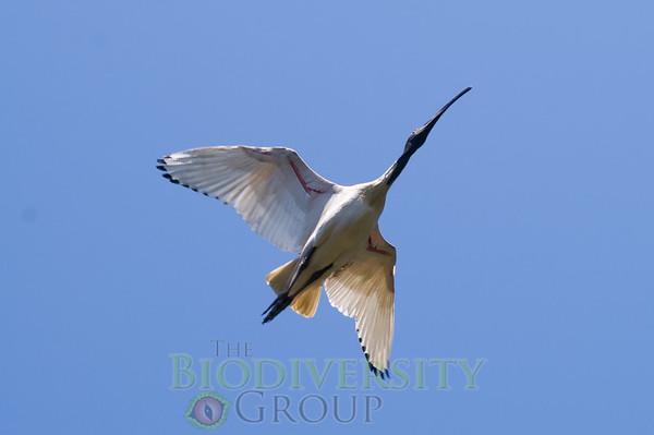 Biodiversity Group, PICT1866