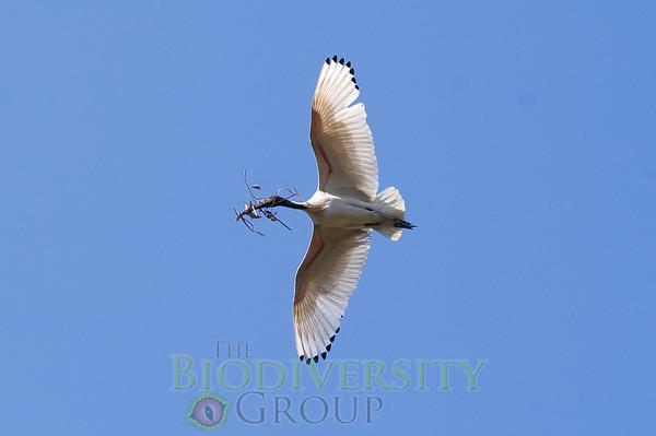 Biodiversity Group, PICT1854