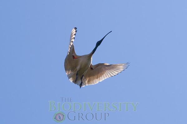 Biodiversity Group, PICT1898