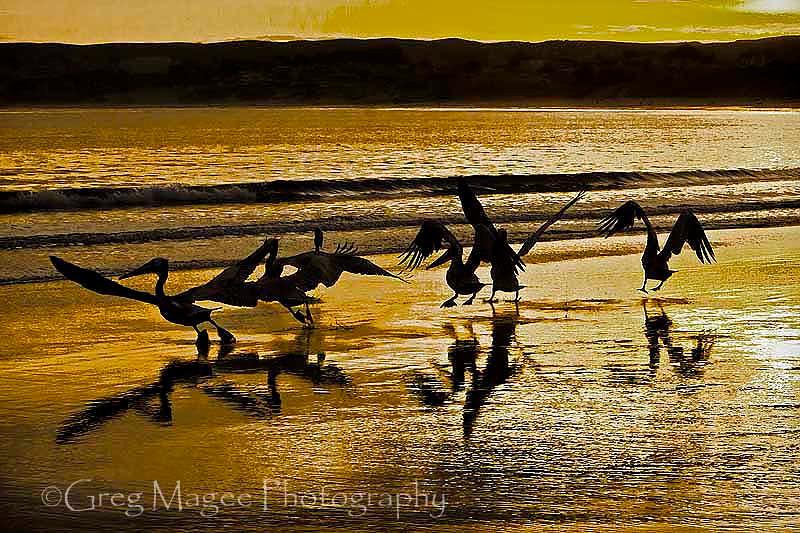 Flight Dance