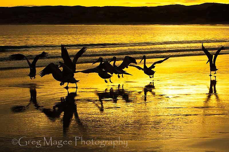 Pelican Departure