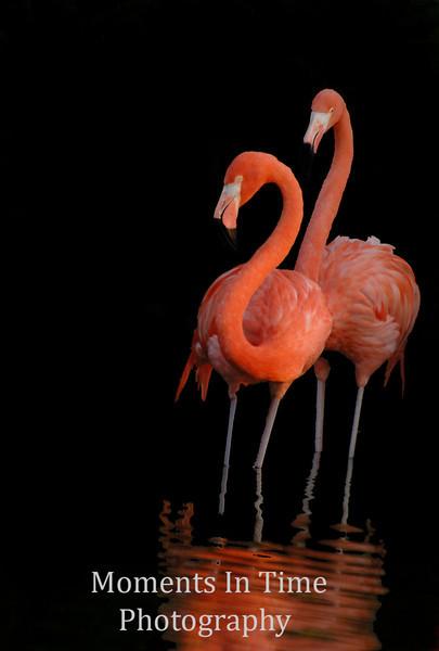Flamingo mates v