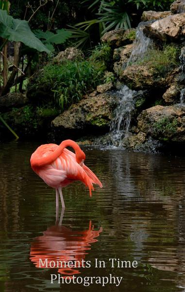 Flamingo beauty v