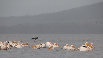- Lake Nakuru National Park, Kenya