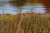 <center>Song Sparrow <br><br>Bold Point Park<br>East Providence, Rhode Island</center>