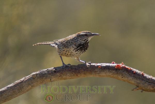 Biodiversity Group, DSC06643