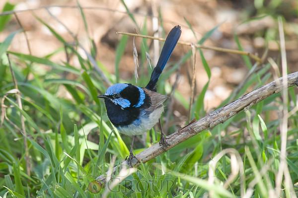 Biodiversity Group, PICT2292
