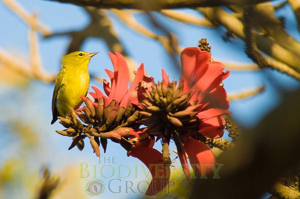 Biodiversity Group, PICT3344