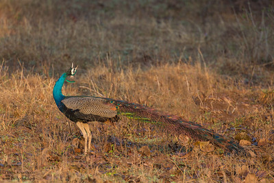- Pench National Park, India