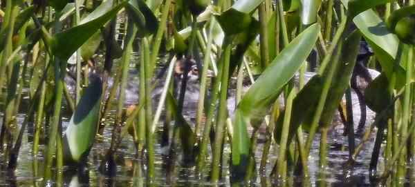 Hidden in the vegetation