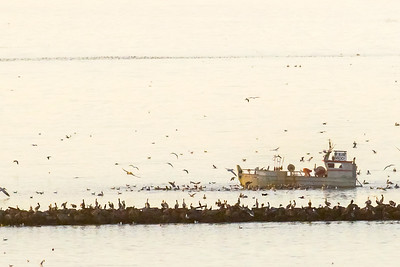 Herring fishing off Richmond Breakwater