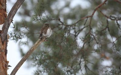 4.12.2016 Joutsa, Finland