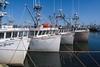 Lr W Pubnico wharf-8150333
