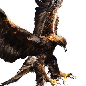 Golden Eagle-3863-Edit
