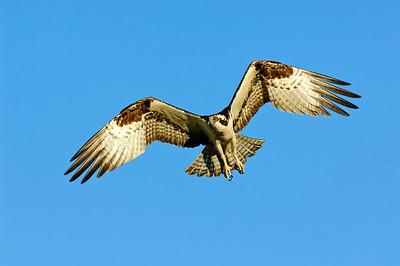 Osprey-174-2