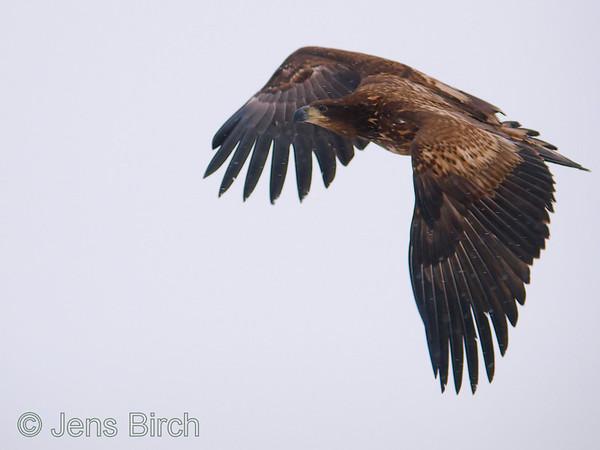 Scanian eagles (Skånska Örnar) 2009