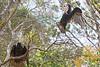 Vultures9204