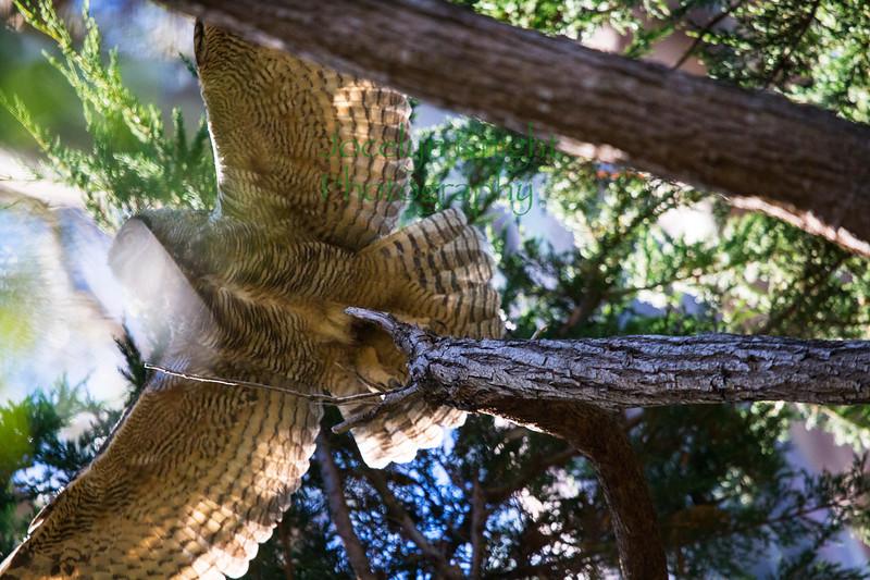 Owl0886
