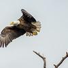 Eagles-12-5-16-217