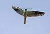 Kite5492