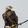 Eagles-12-5-16-159