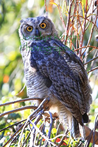 Owl0724