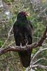 Vulture9223