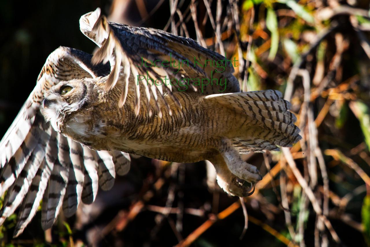 Owl0858
