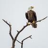 Eagles-12-5-16-153