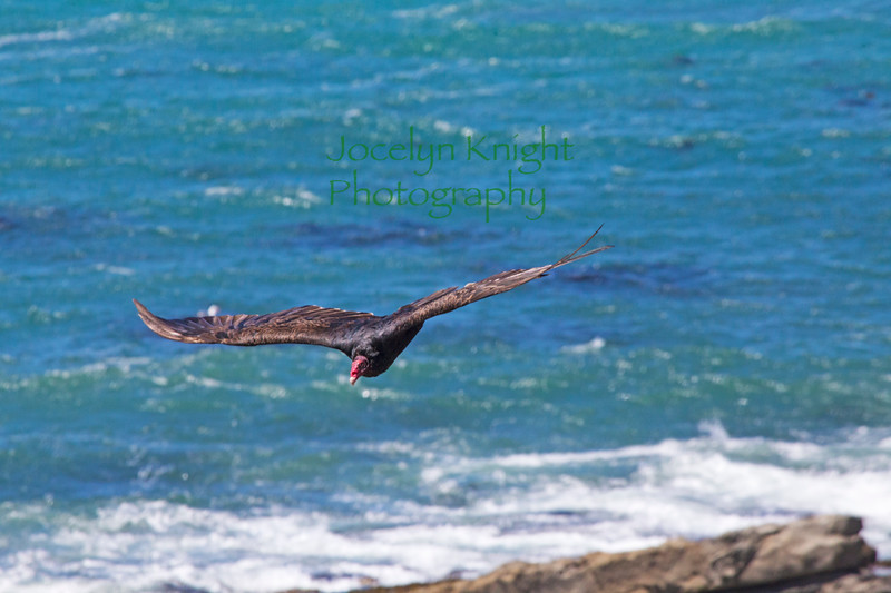 Vulture1053