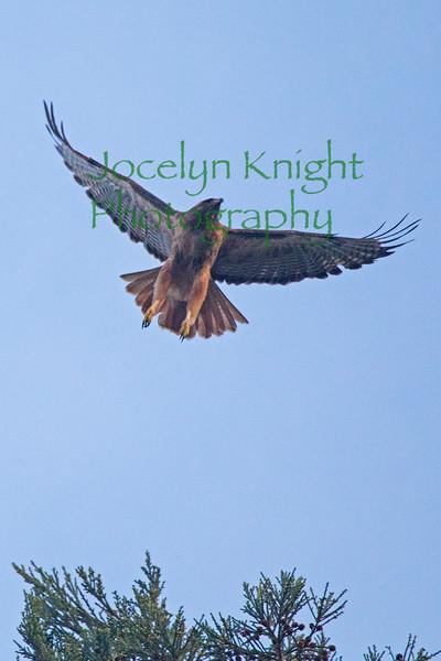 Hawk9132