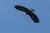 Eagle(8x12)2815