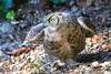 Owl0715