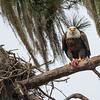 Eagles-12-5-16-126