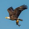 Eagles-12-7-16-096