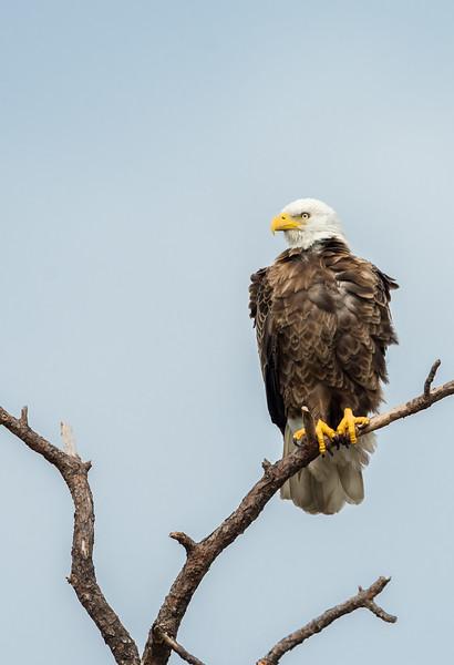 Eagles-12-5-16-211