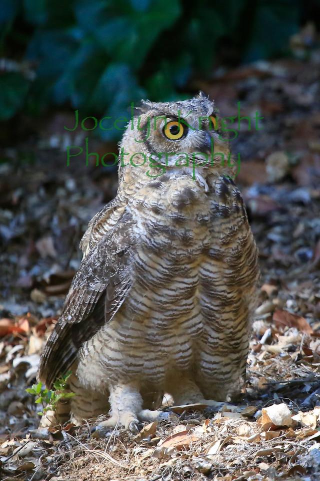 Owl0698