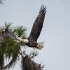 Eagles-12-5-16-106
