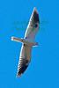 Kite1406(8x12)