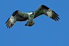 Osprey2783 copy