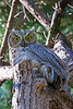 Owl0786