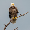 Eagles-12-5-16-208