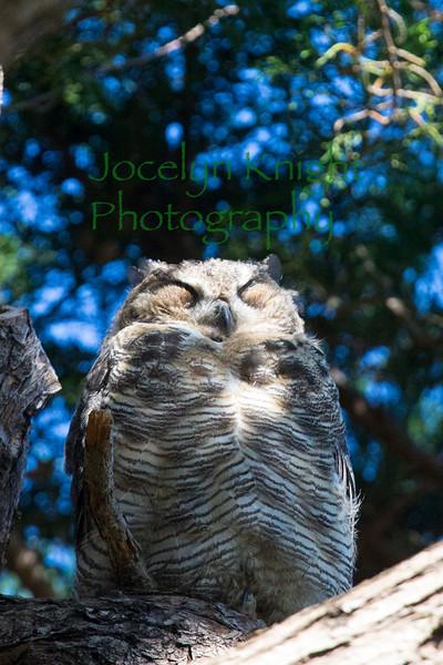 Owl0799
