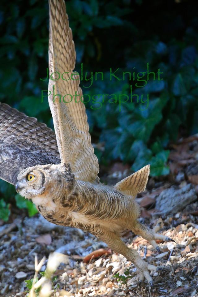 Owl0716
