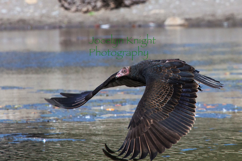 Vulture4040