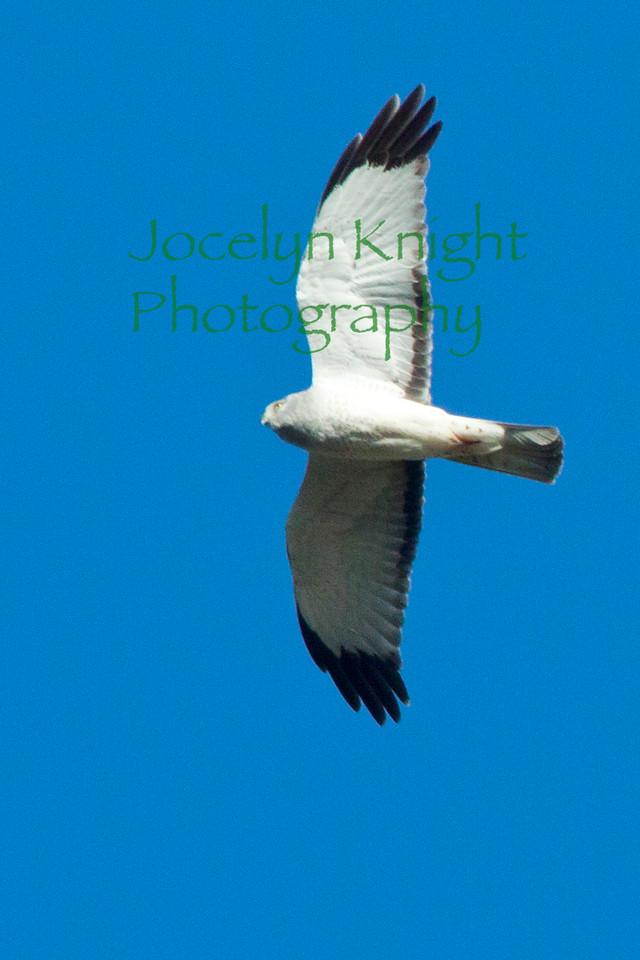 Hawk8345